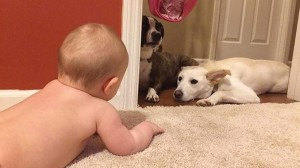 How to Mix Toddlers and Puppies