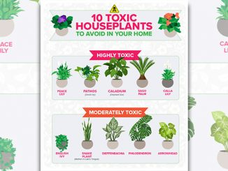 10 houseplants parents should AVOID buying