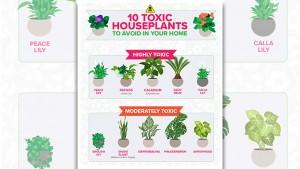 10 houseplants parents should AVOID buying