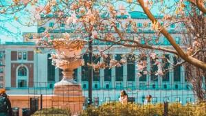 Attend a Virtual College Fair