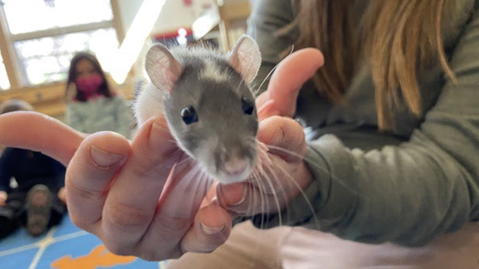 Funding for Classroom Pets Available to Teachers